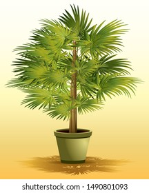 Lady palm houseplant (Rhapis excelsa) in vector illustration
