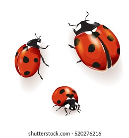 Ladybird, Ladybird illustration. Set of three ladybirds isolated on white. Can be used in different ways of design, appearance, cover, etc.  Vector - stock