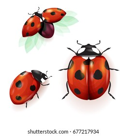 set of three ladybirds isolated on white can be used in different
