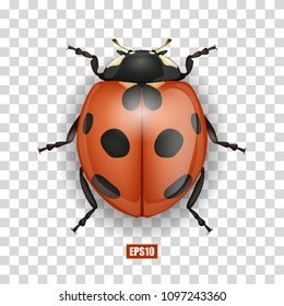 Ladybird isolated on a transparent background, beautiful insect, 3D design. Vector EPS10
