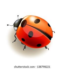 Ladybird on white background . Vector illustration.