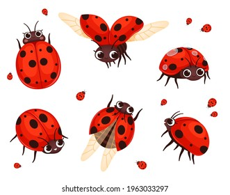 Ladybug. Flying closeup insects in action poses nature bugs nowaday vector illustrations of cartoon red ladybugs