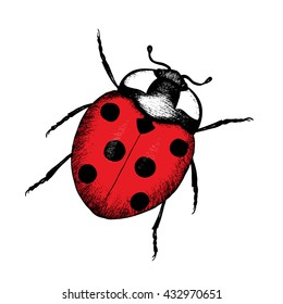 Ladybug hand drawn vector illustration. Zoological sketches of insect card. Drawing