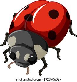A ladybug insect on white background illustration