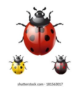 Ladybug isolated on white background. EPS10 vector.