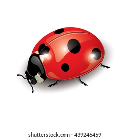 Ladybug isolated on white, vector illustration, eps-10