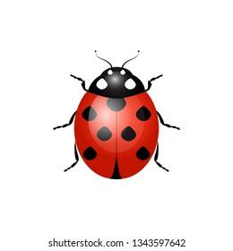ladybug, ladybird, fly