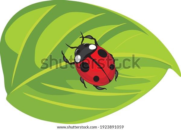 ladybug-on-green-leaf-vector-600w-192389
