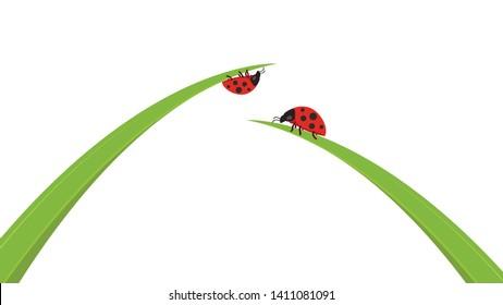ladybug on leaf. wallpaper. free space for text. background. symbol. ladybug on white background.