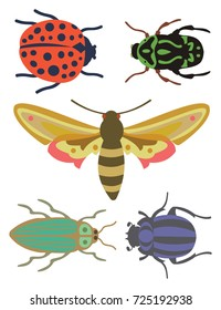 A Ladybug, Scarab, Two Beetles and a Moth