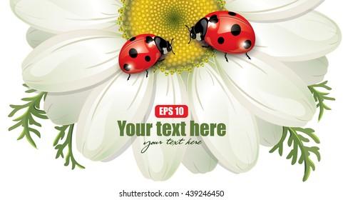 Ladybug sitting on White Daisy, design, vector illustration, eps-10