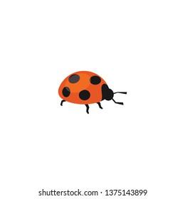 ladybug vector on a white background