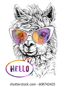 LAMA Alpaca in eyeglasses, Hipster style drawing, isolated on white. Object for advertisement, web page design, poster, banner, print element. vector illustration.