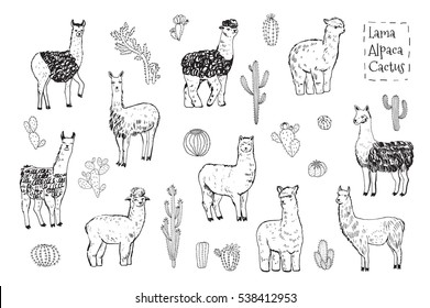 lama animal vector set