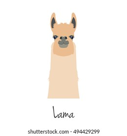 Lama head isolated. Vector guanaco face in flat style. Wild nature animal. ELement for your advertisement, poster, print, banner or web design.