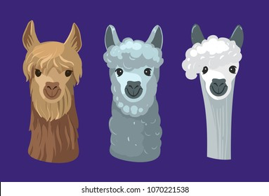 Lama's head. Alpaca. Vector illustration