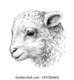 Lamb. Sketch, hand-drawn, black-and-white portrait of a lamb's head on a white background.