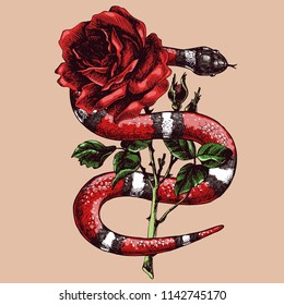 Lampropeltis triangulum and rose. Hand drawn vector illustration with coral snake, milk snake or royal striped snake and flower.