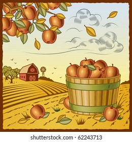 Landscape with apple harvest. Vector