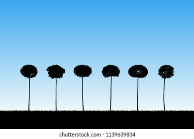 Landscape with decorative trees. Vector illustration with isolated silhouettes of maples growing in grass. Blue pastel background
