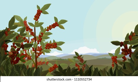 Landscape with Forest, coffee tree, mountains and plants