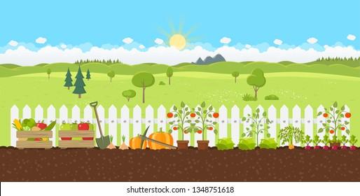 landscape gardening planting growing vegetables flat design