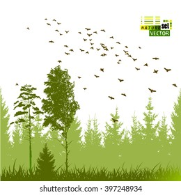 Landscape nature trees with birds. Vector
