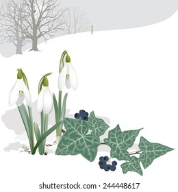 Landscape with Snowdrops and Ivy - Background. Hand drawn vector illustration of a landscape with snowdrops piercing the snow, ivy  and the edge of the woods.