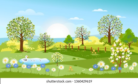 Landscape of Summer village with farm field and family of ducklings swimming in duck pond, Vector panoramic of Spring fields with cherry blossom, green hills, bright colour blue sky on summer