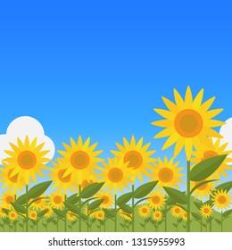 Landscape with sunflower on blue sky background.