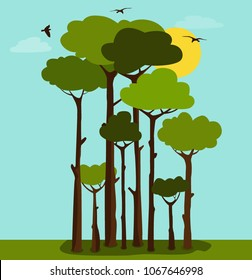 Landscape with tall trees and birds flyiny in the sky. Vector illustration.