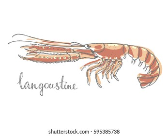 Langoustine. Seafood design elements. Seafood / fish menu, poster, label etc. Hand drawn illustration in marker sketch style. Colorful vector illustration.