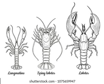 Langoustine, spiny lobster, lobster. Seafood. Vector set of crustaceans. Isolated image on white background. Vintage style.