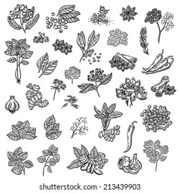large collection of different spices and herbs. Natural spices. Compilation of vector sketches. Kitchen herbs and spice. Vintage style. Hand drawn.