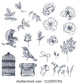 A large collection of old illustrations. Birds, dog roses, leaves, plants, cage, typewriter, ribbons.  Ink illustration by hand. Graphic arts.