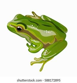 Large green frog vector illustration EPS 10