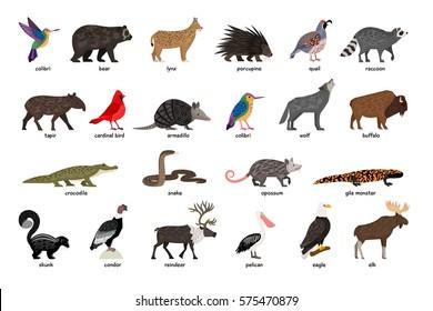 Large set of animals of North America