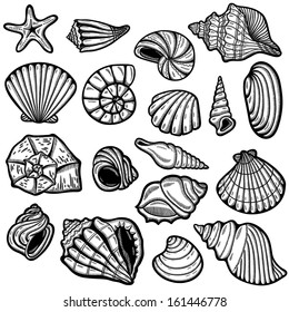 Large set of black&white graphic sea shells. Isolated objects on white background. Retro style.