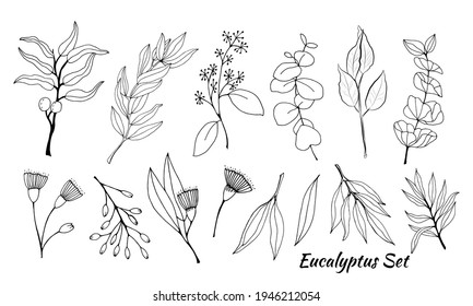 Large set of eucalyptus leaves and branches. Collection of eucalyptus branches. Vector illustration of greenery. Eucalyptus with seeds. - Shutterstock ID 1946212054