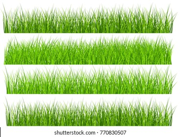Large set of fresh green spring grass borders in  lengths and densities for use as design elements isolated on white background