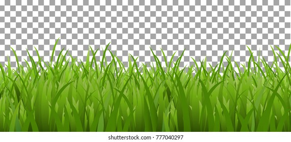 Large set of fresh green spring grass borders in lengths and densities for use as design elements isolated on Transparent background. Vector illustrations