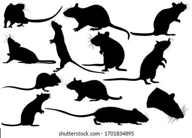 Large set of graphic illustration of a black silhouette of a realistic rat in isolate on a white background. Vector illustration