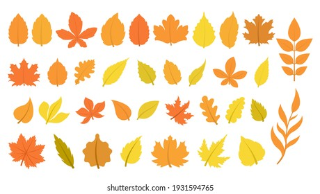 Large set of leaves in autumn colors. 36 different leaves