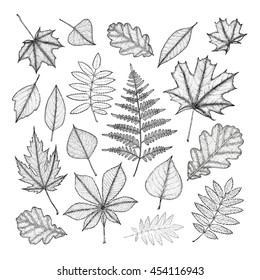 large set of leaves of various trees. Hand drawing. Vector illustration