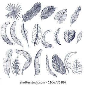 large set of palm leaves of different kinds, hand drawing, vector