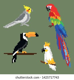 a large set of parrots, ara toucan and cockatoo. pixel graphics