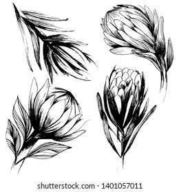 Large set with a large protea flower. Buds and leaves in different angles. Hand draws a pencil. Black and white set with beautiful flowers on a white isolated background. For textile, design, scrapboo