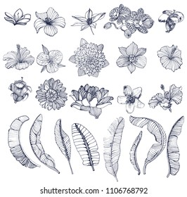 large set of tropical flowers and palm leaves, hand drawing, isolated on white background, contour, vector illustration