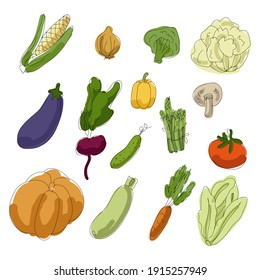 A large set of vector vegetables. Hand-drawn vegetables. Pumpkin, beetroot, cabbage, broccoli, carrot, pepper, asparagus, cucumber, tomato, onion, corn, mushroom, zucchini, eggplant.