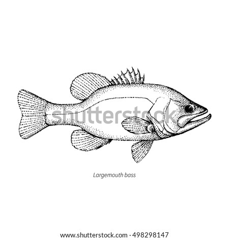 Largemouth Bass Fish Hand Drawn Outline Stock Vector Royalty Free